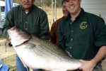 alabama-striper-record
